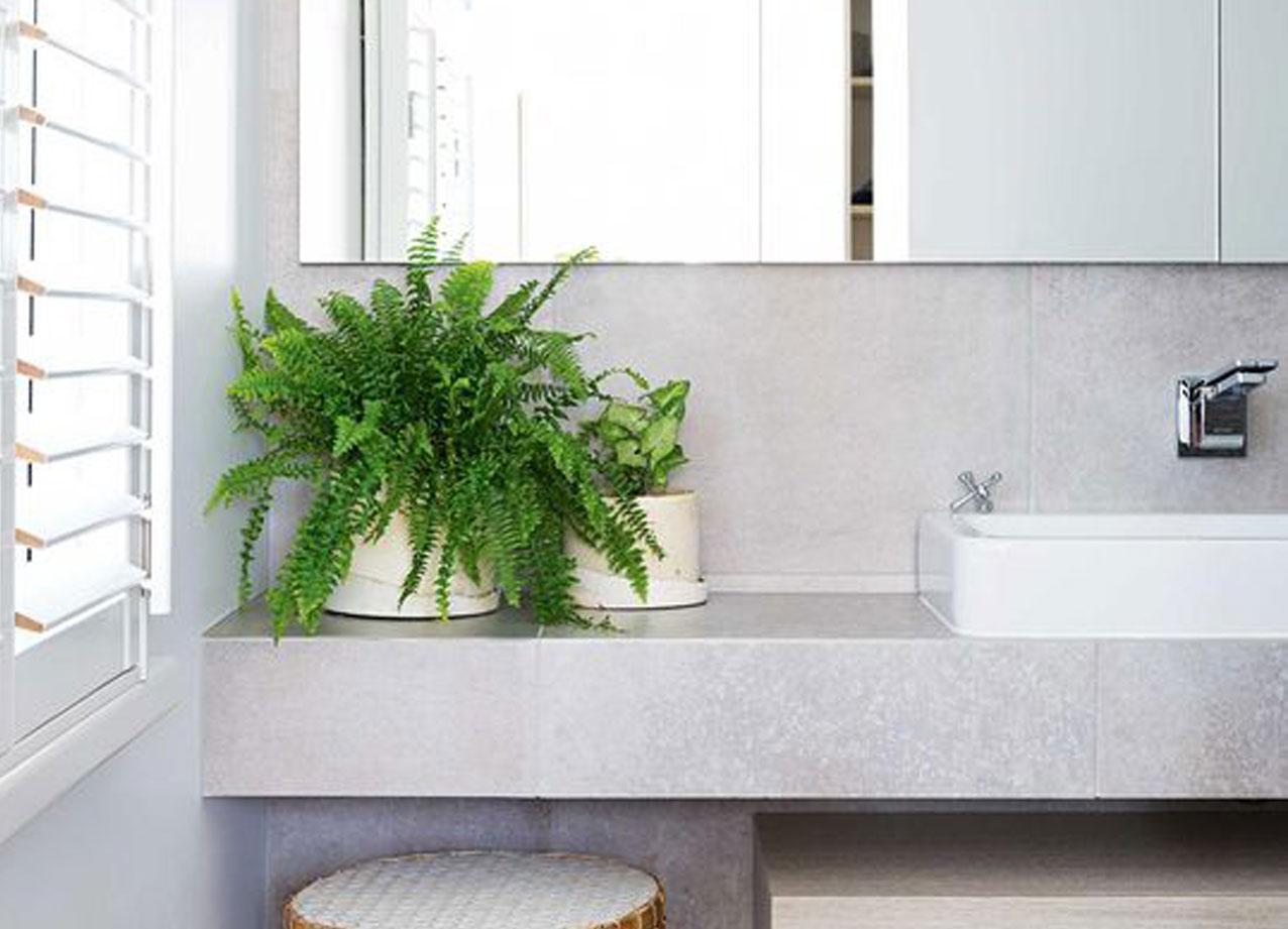 pflanzen feiern auch im bad ihr gr nes comeback. Black Bedroom Furniture Sets. Home Design Ideas